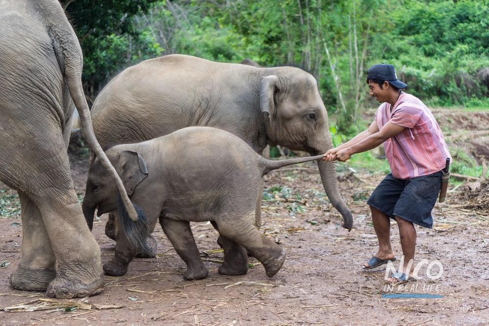Playful elephants at Elephant Jungle Sanctuary - Chiang Mai, Thailand